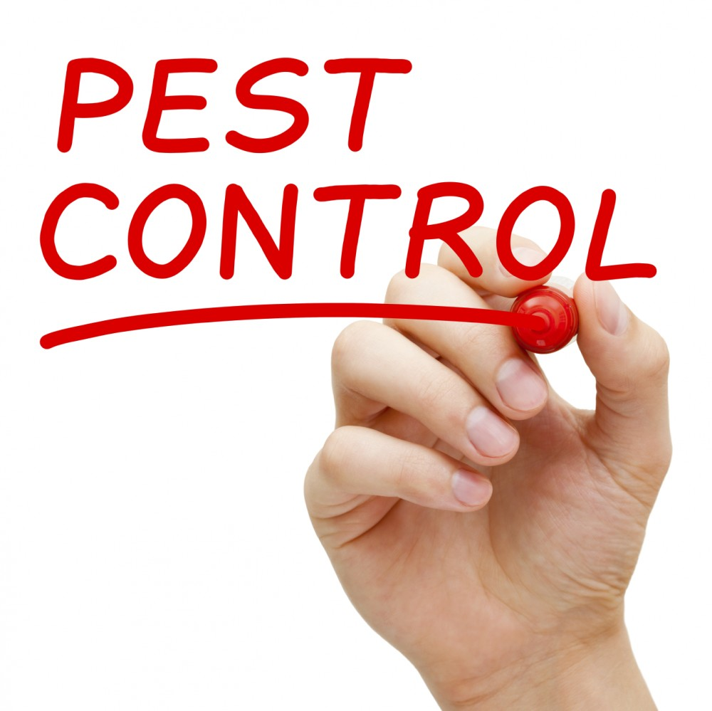 Top 6 Tips To Save Your Home From Pest Infestation