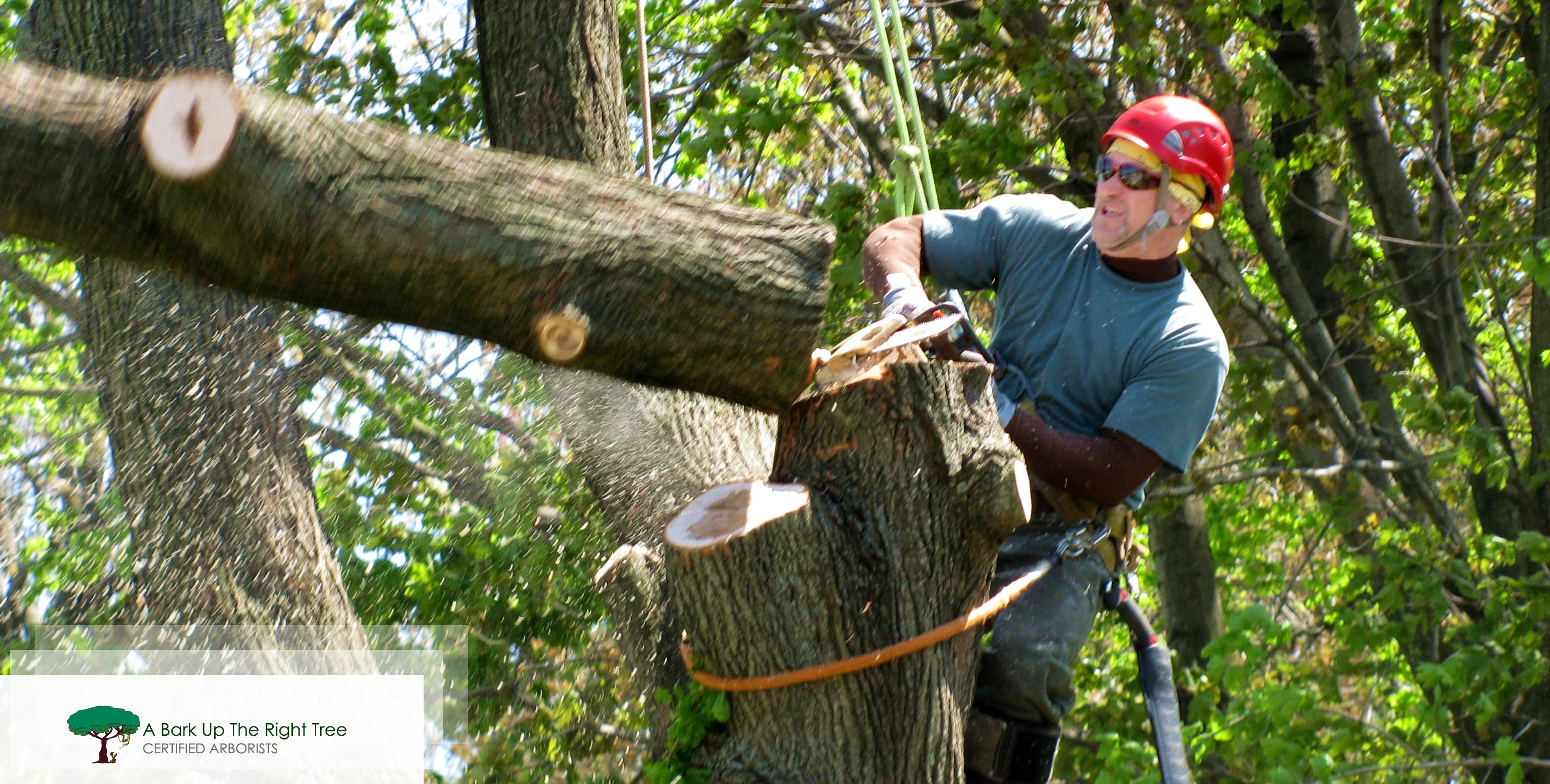Why Should You Hire a Professional Tree Removal Company?