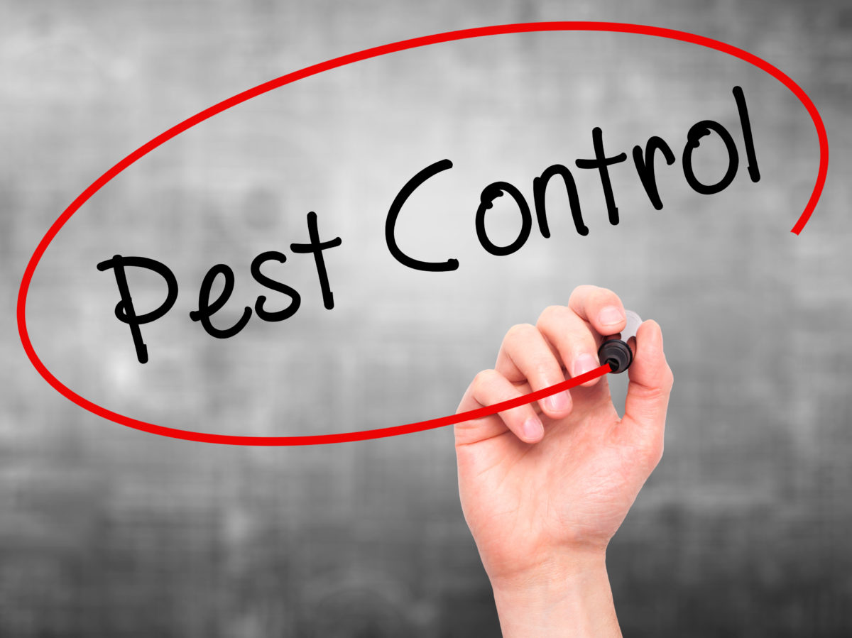 Why Professional Pest Control Exterminator Is a Good Idea For The Pest Inspection?