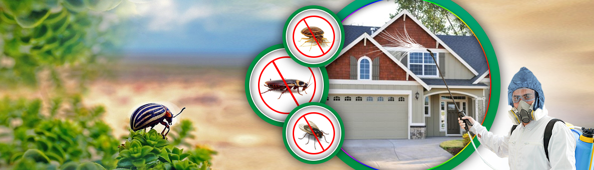 Get Rid Of Pest Now On the Platform of Expert Pest Control
