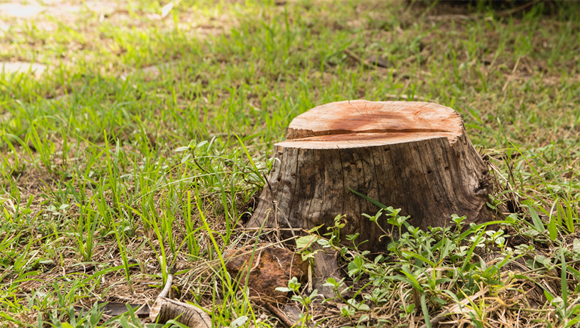 Need To Have Stump Removal To Make The Yard More Enjoyable