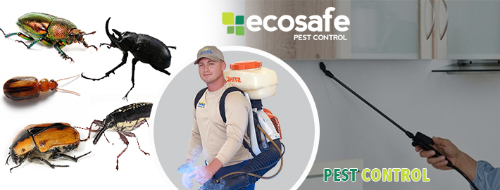 Modern Technology Electronic Pest Control – how it helps to reduce PEST?