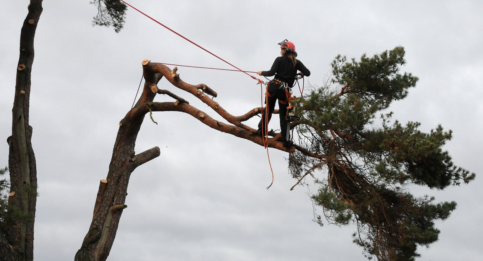 Proper tree trimming ensures safety and preserves aesthesis