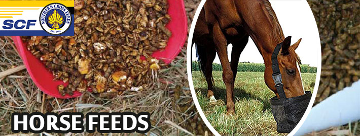 What active ingredients to look for in a horse feed balancer?