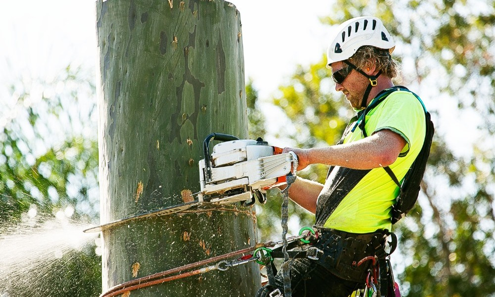 Tree Removal Adelaide Makes The Safer And More Attractive Yard
