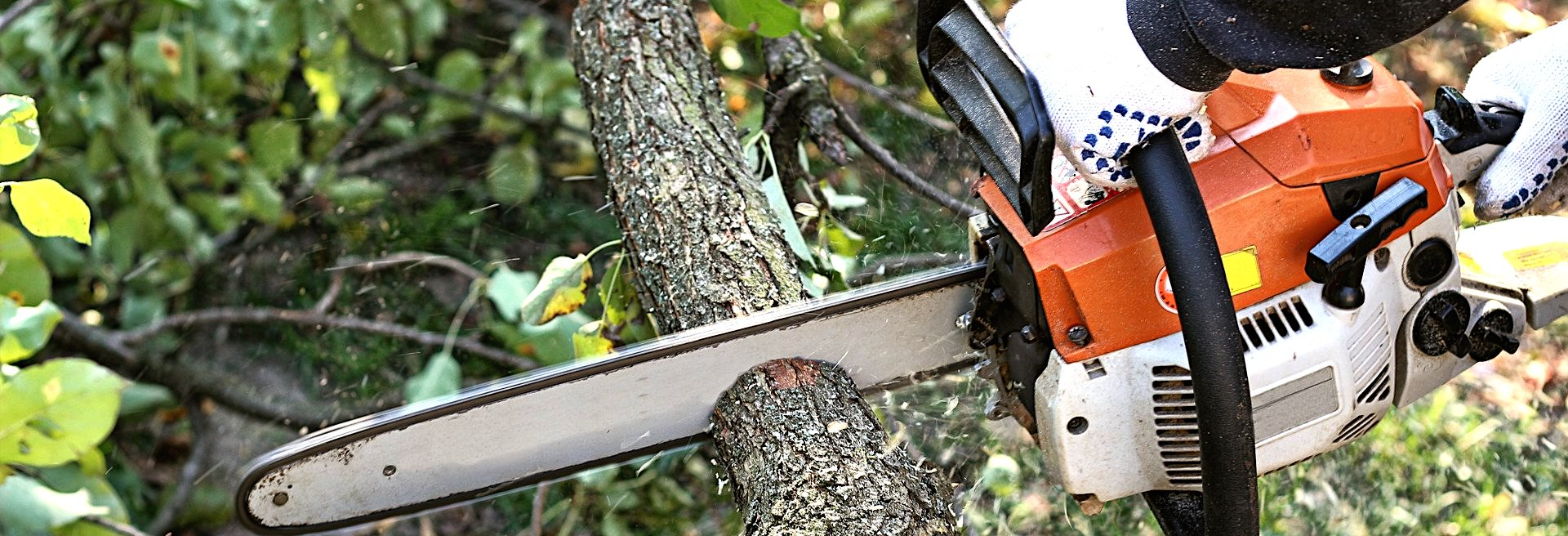 What Needs To Know About Tree Removal Process?