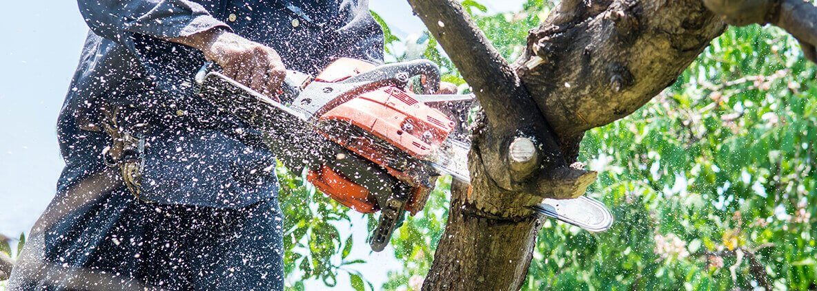 The Factor That Can Make Your Tree Removal In Adelaide A Bit Costly