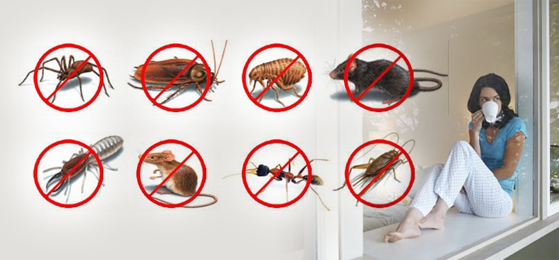 Few Benefits You Should Include Before Hiring Pest Control Company