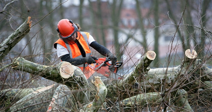 Which Techniques Used By Experts To Give Safest Tree Removal Services?