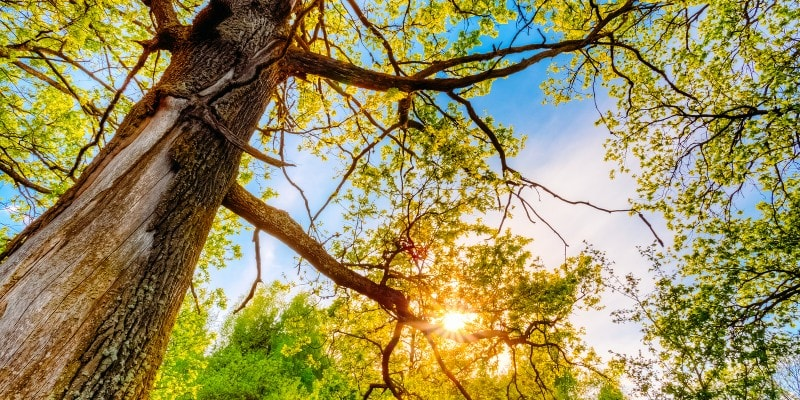 A Complete Tips You Should Consider for Tree Removal Services
