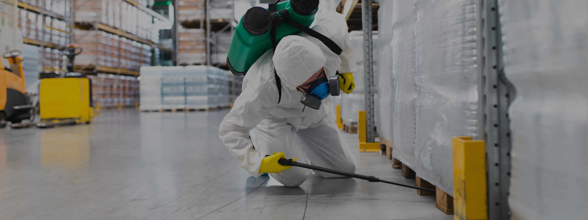 How Pest Control Services Improve Quality Of Life?