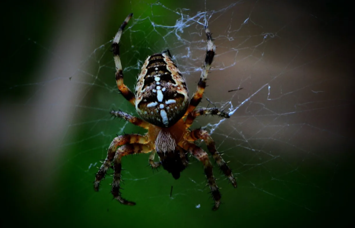 5 tips to kill and prevent spider infestation
